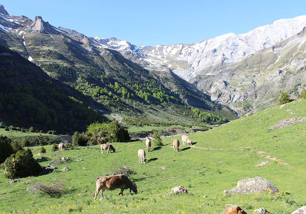 PINETA CASCADA DEL CINCA Y LLANOS DE LALARRI3 - Cascadas del Cinca y Llanos de Lalarri